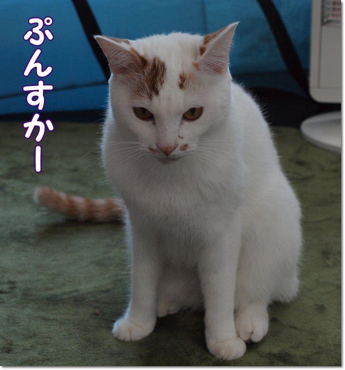 1daisylistpunsukakiroku20130128 (1)