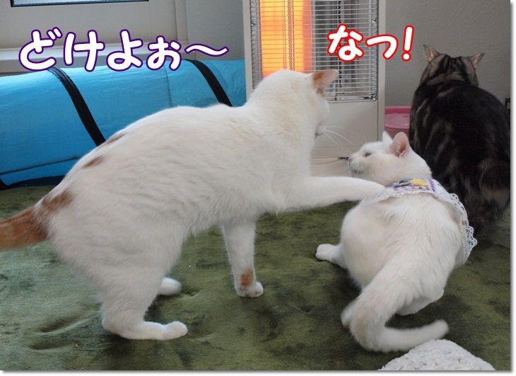1daisylistpunsukakiroku20130128 (2)