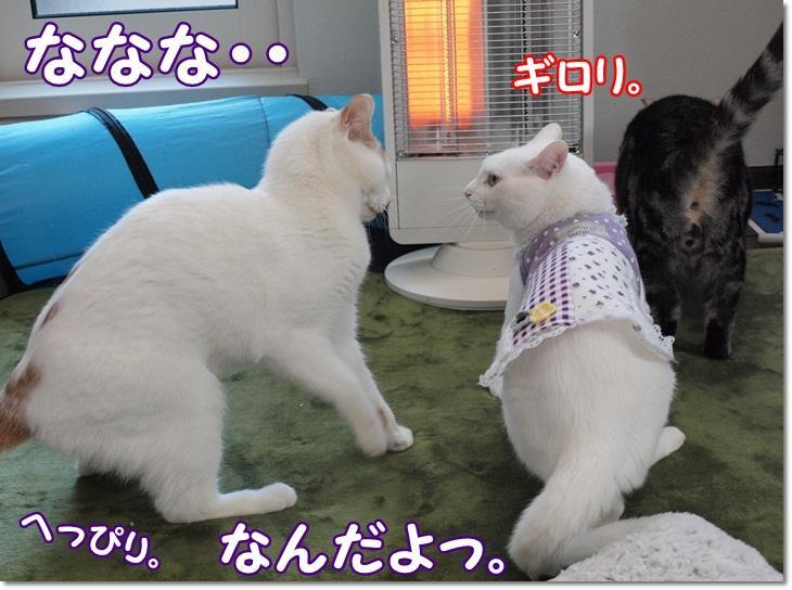 1daisylistpunsukakiroku20130128 (4)