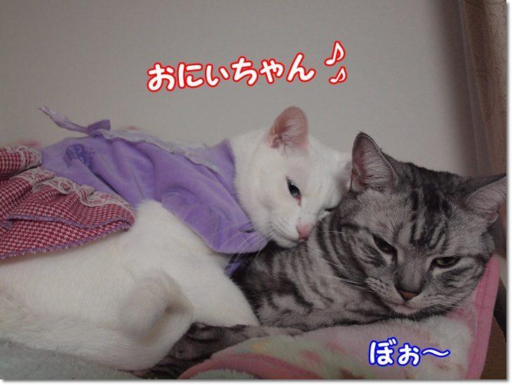 1wendydaisysukisukikougeki20130209 (1)