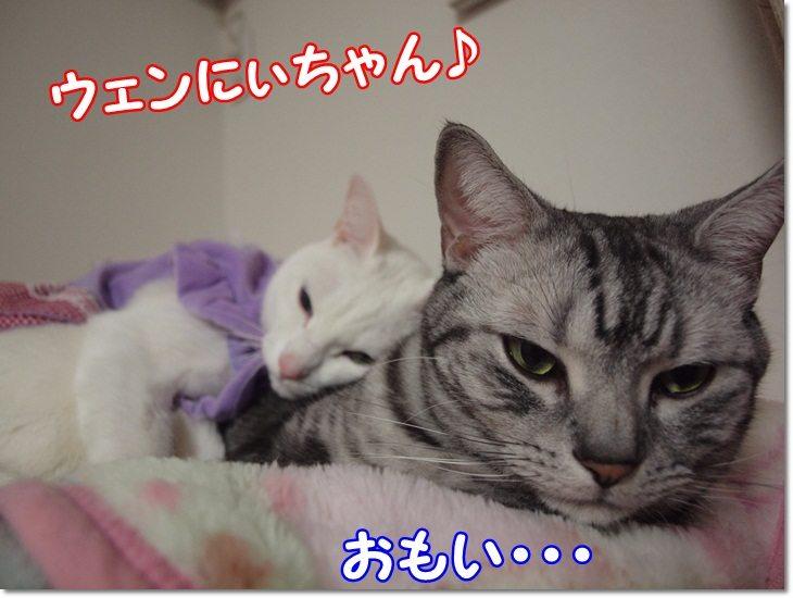 1wendydaisysukisukikougeki20130209 (3)