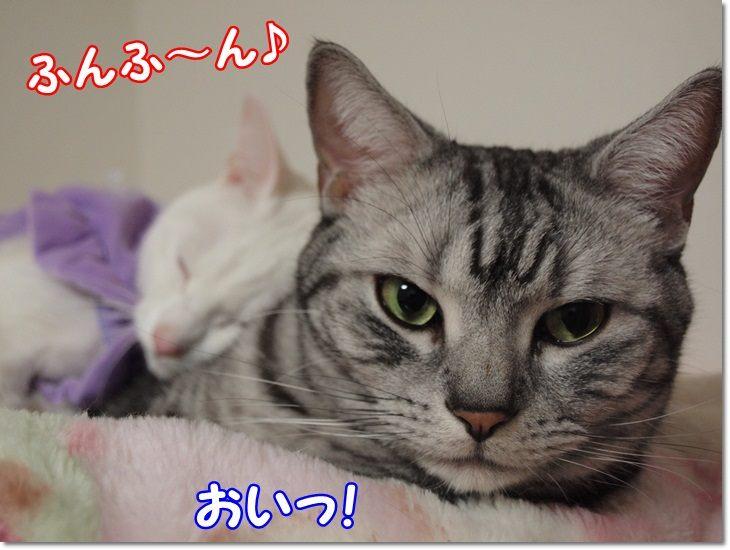 1wendydaisysukisukikougeki20130209 (4)