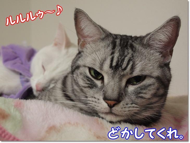 1wendydaisysukisukikougeki20130209 (5)