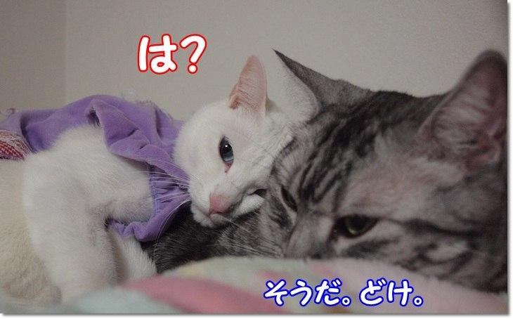 1wendydaisysukisukikougeki20130209 (6)