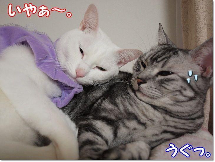 1wendydaisysukisukikougeki20130209 (8)