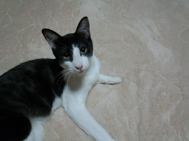 urawacatsmoblog_501741d6.jpg