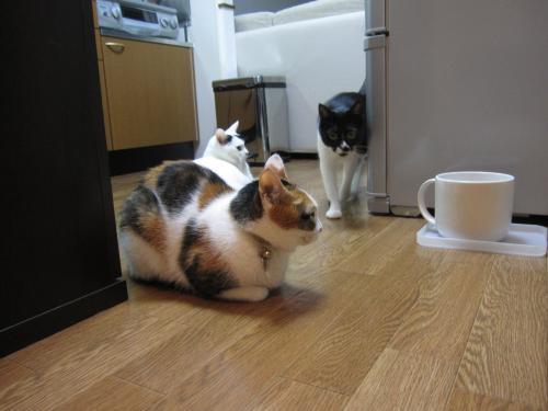 茶々、参上!