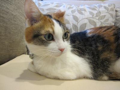 猫は表情筋がとても少ないのよ