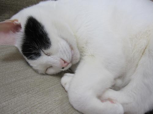 寝る子はネコになる