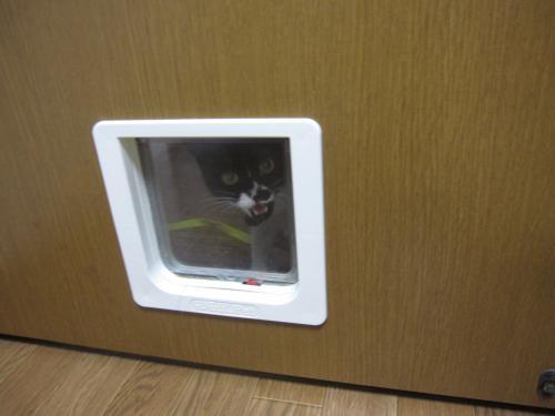 入れてよー!開けてよー!