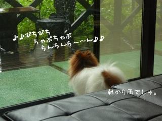 2ok_P.jpg