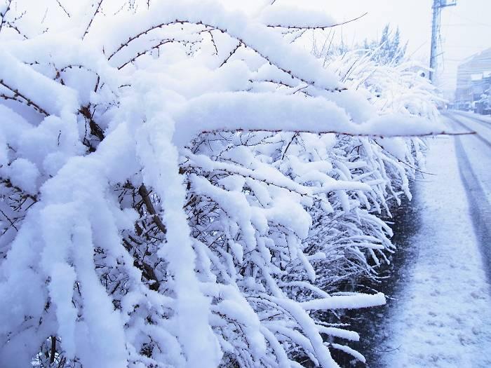 雪_999-s
