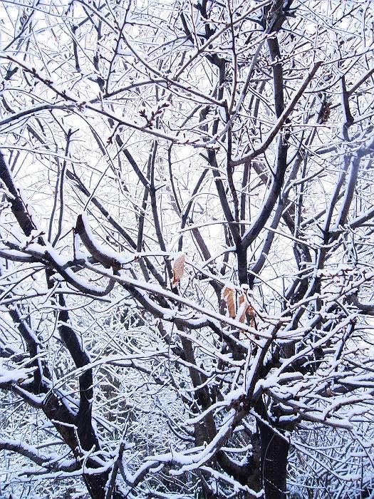 雪_999_1-s
