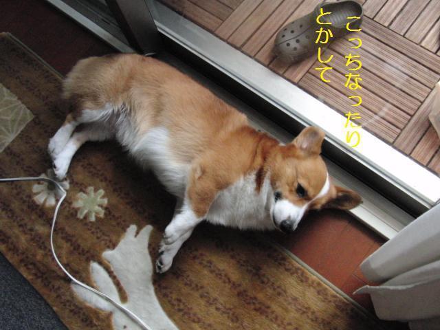 010_20100806132022.jpg