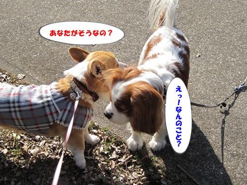芦花公園デート 009