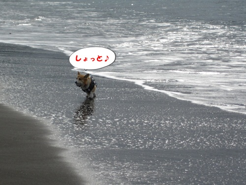 IMG_0549_20110104113038.jpg