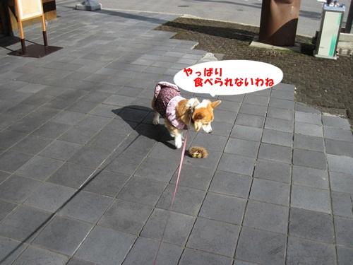 IMG_0669_20111002085404.jpg