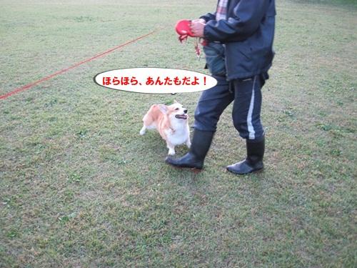 IMG_2260_20111113084207.jpg