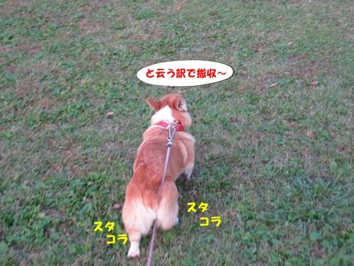 IMG_3517_20121027113356.jpg