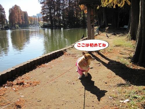IMG_3839_20121202104443.jpg