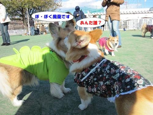 IMG_3999_20121215132035.jpg