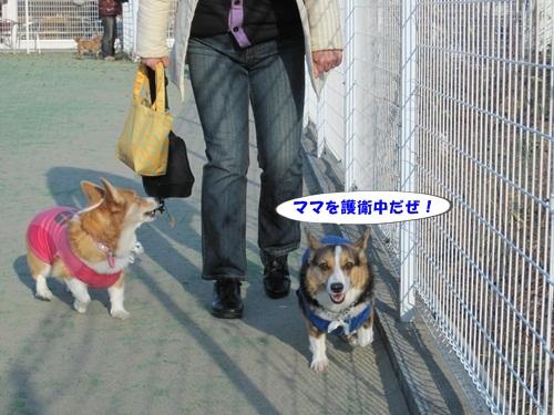 IMG_4042_20121215131736.jpg