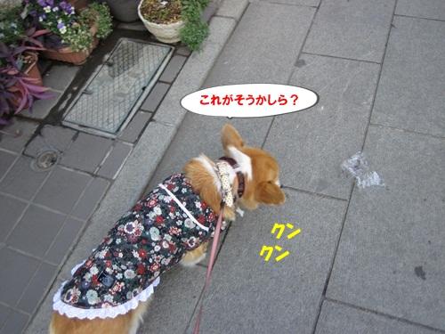IMG_4209_20111223082606.jpg
