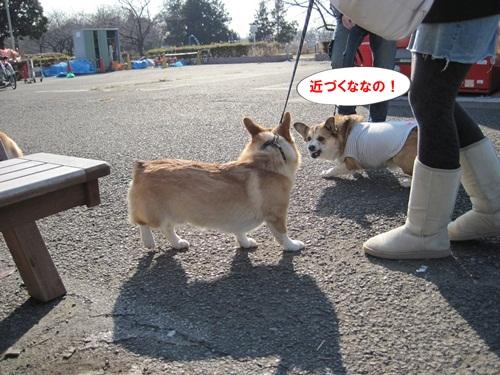 IMG_4372_20111230074907.jpg