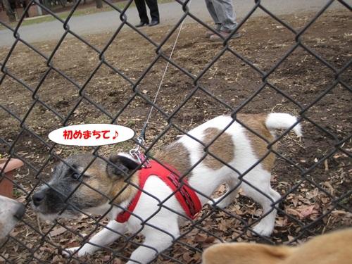 IMG_4646_20120107081515.jpg