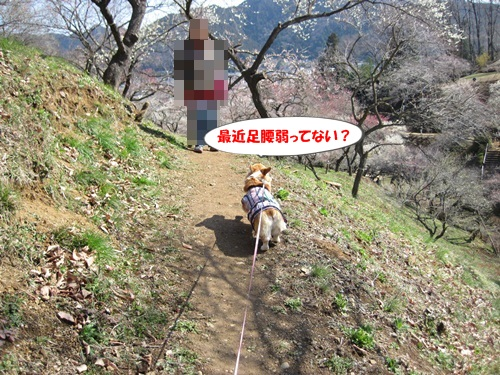 IMG_5853_20120403211156.jpg