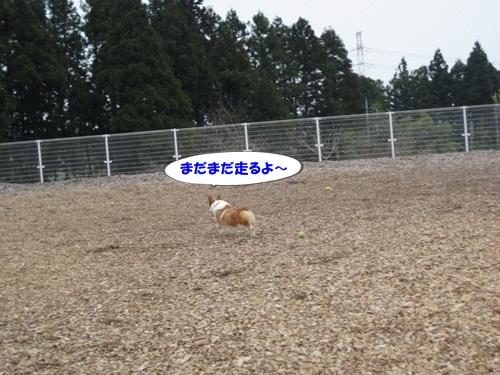 IMG_7438.jpg