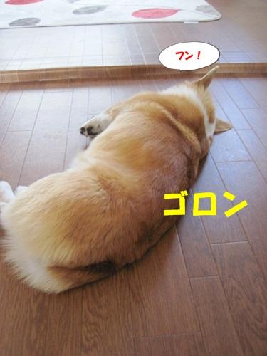 IMG_8114_20120527070612.jpg