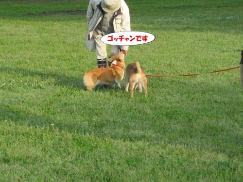 IMG_8121_20120527071306.jpg