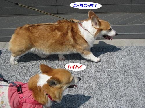 IMG_8160_20120530203751.jpg