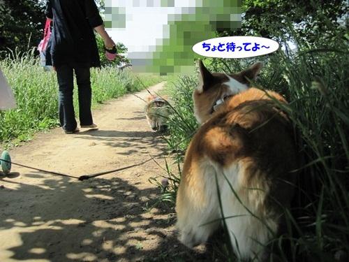 IMG_8166_20120530203750.jpg