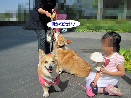IMG_8189_20120530203607.jpg