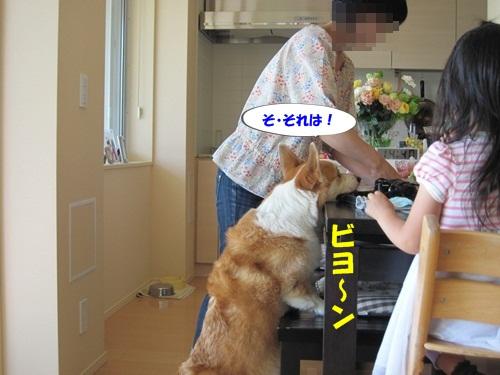 IMG_8207_20120530203411.jpg