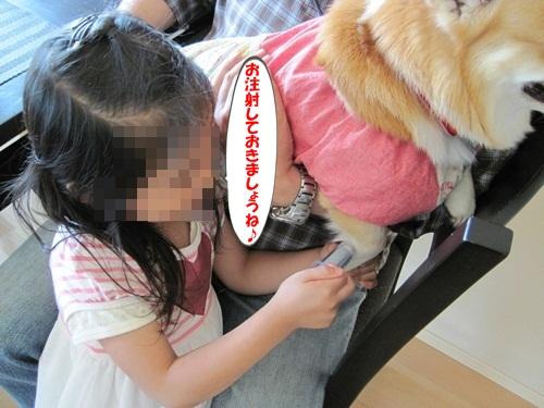 IMG_8240_20120530203130.jpg