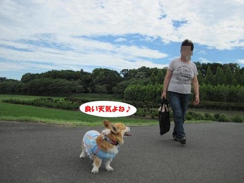IMG_9015_20120624135940.jpg