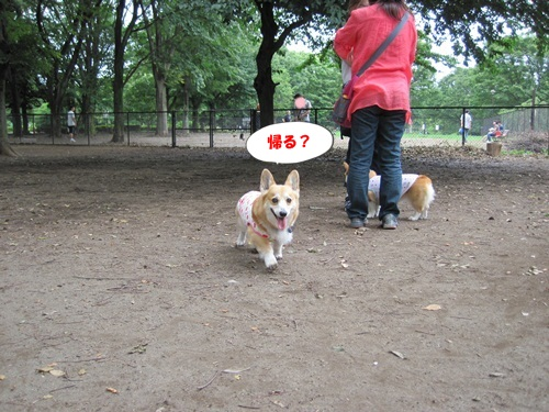 IMG_9113_20120624102935.jpg