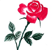 rose小