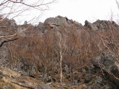 樹林帯から見上げた稲子岳南壁