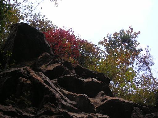 紅葉の始まる南国エリア