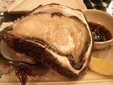 鰓呼吸(岩牡蠣)