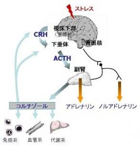 image2 - コピー (3)