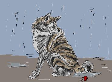 ふぶ座り雨中