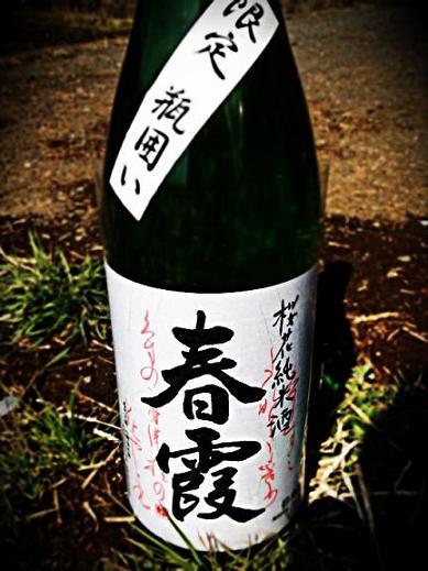 春霞 桜花純米