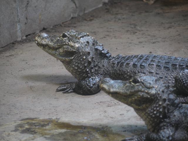 maruyama-zoo_09.jpg