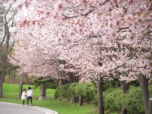 nakajima-park_04t.jpg