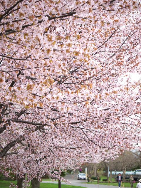 nakajima-park_05t.jpg